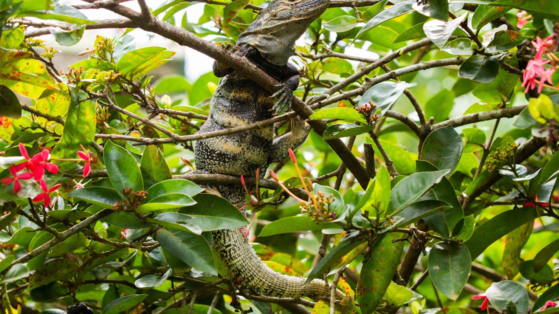 Road Trip na Costa Rica